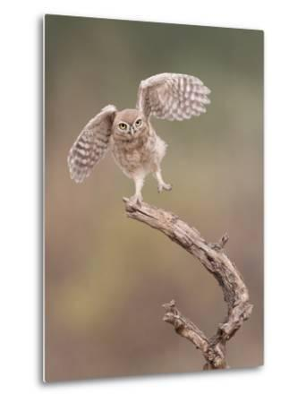 I'm Just a Gigalo-Amnon Eichelberg-Metal Print
