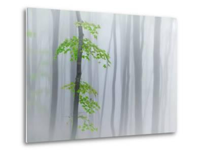 The Fog and Leaves-Michel Manzoni-Metal Print