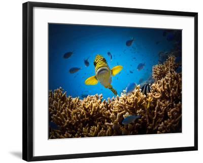 Get Out of My Territory!!!- Luckyguy-Framed Photographic Print