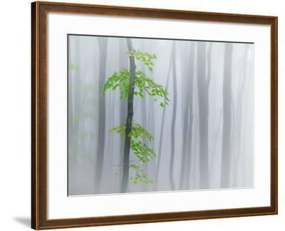 The Fog and Leaves-Michel Manzoni-Framed Photographic Print