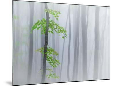 The Fog and Leaves-Michel Manzoni-Mounted Photographic Print