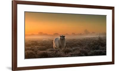Sheep in the Mist-Rijko Ebens-Framed Premium Photographic Print