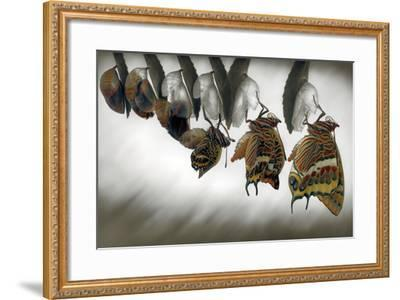 Emergence-Jimmy Hoffman-Framed Photographic Print
