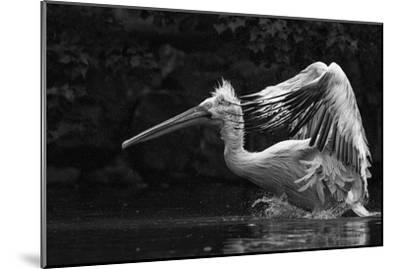 Folded Wings-C.S. Tjandra-Mounted Photographic Print