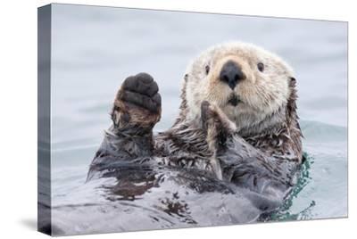 Yesterday I Caught a Fish Thiiis Big! - Otter. Alaska-Roman Golubenko-Stretched Canvas Print