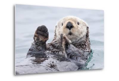 Yesterday I Caught a Fish Thiiis Big! - Otter. Alaska-Roman Golubenko-Metal Print
