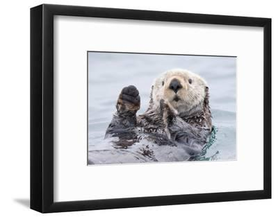Yesterday I Caught a Fish Thiiis Big! - Otter. Alaska-Roman Golubenko-Framed Photographic Print