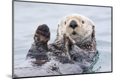 Yesterday I Caught a Fish Thiiis Big! - Otter. Alaska-Roman Golubenko-Mounted Photographic Print