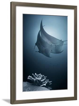 Sonata-Andrey Narchuk-Framed Photographic Print