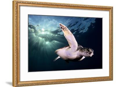 Afternoon-Sergi Garcia-Framed Photographic Print