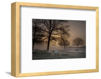Foggy Morning-Piet Haaksma-Framed Photographic Print