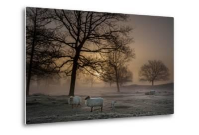 Foggy Morning-Piet Haaksma-Metal Print