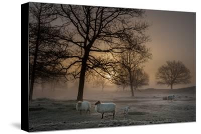 Foggy Morning-Piet Haaksma-Stretched Canvas Print