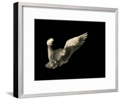 Air Breaking- Anthonyroberts-Framed Photographic Print