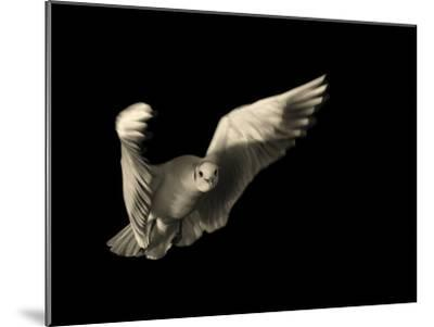 Air Breaking- Anthonyroberts-Mounted Photographic Print