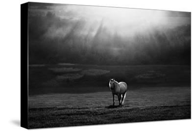 Morning Appearance-Peter Svoboda-Stretched Canvas Print