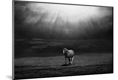 Morning Appearance-Peter Svoboda-Mounted Photographic Print