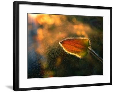 Sunshine Through the Rain-Tomer Yaffe-Framed Photographic Print