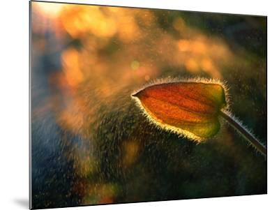 Sunshine Through the Rain-Tomer Yaffe-Mounted Photographic Print
