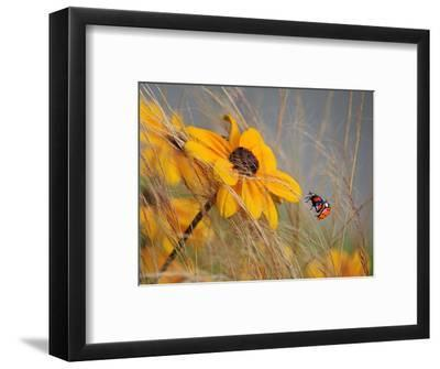 Colors of Summer-Anna Cseresnjes-Framed Photographic Print