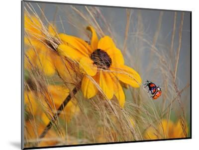 Colors of Summer-Anna Cseresnjes-Mounted Photographic Print