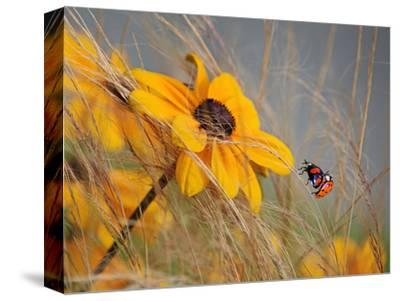 Colors of Summer-Anna Cseresnjes-Stretched Canvas Print