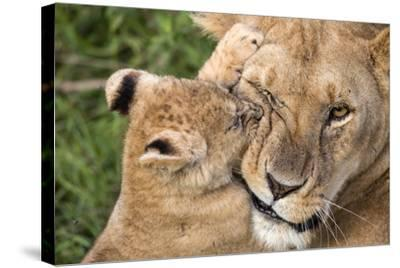 Mother Love-Alessandro Catta-Stretched Canvas Print