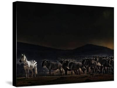 An Evening in Kenya-Piet Flour-Stretched Canvas Print