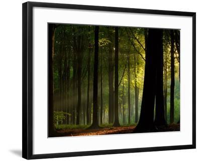 Before the Fall- Joris-Framed Photographic Print