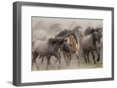 Wildpferde-Dieter Uhlig-Framed Photographic Print