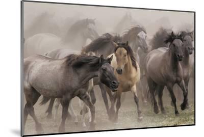 Wildpferde-Dieter Uhlig-Mounted Photographic Print