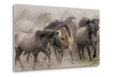 Wildpferde-Dieter Uhlig-Metal Print