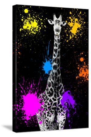 Safari Colors Pop Collection - Giraffe VII-Philippe Hugonnard-Stretched Canvas Print