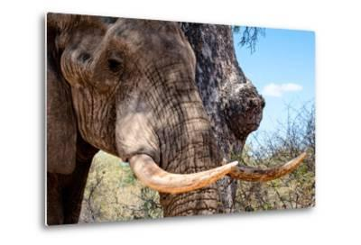 Awesome South Africa Collection - African Elephant VI-Philippe Hugonnard-Metal Print
