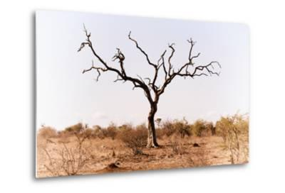 Awesome South Africa Collection - Savanna Tree IX-Philippe Hugonnard-Metal Print