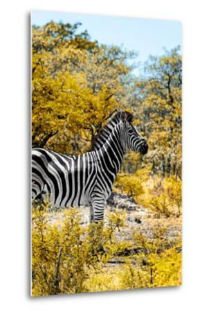 Awesome South Africa Collection - Burchell's Zebra VII-Philippe Hugonnard-Metal Print