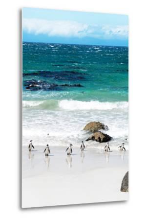 Awesome South Africa Collection - African Penguins at Boulders Beach V-Philippe Hugonnard-Metal Print