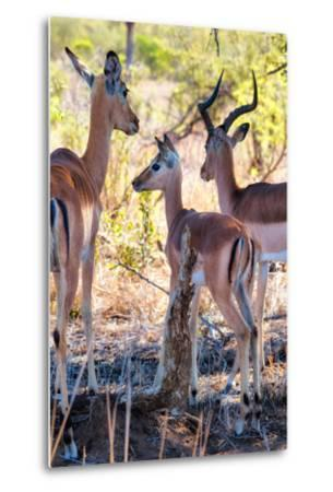 Awesome South Africa Collection - Impala Family I-Philippe Hugonnard-Metal Print