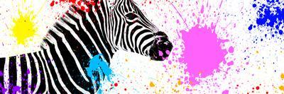 Safari Colors Pop Collection - Zebra VII-Philippe Hugonnard-Stretched Canvas Print