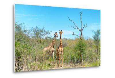 Awesome South Africa Collection - Two Giraffes-Philippe Hugonnard-Metal Print