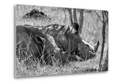 Awesome South Africa Collection B&W - Two White Rhino slepping-Philippe Hugonnard-Metal Print