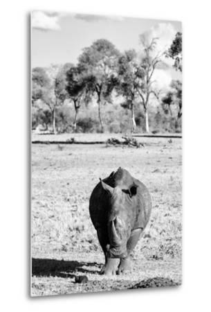 Awesome South Africa Collection B&W - White Rhino-Philippe Hugonnard-Metal Print