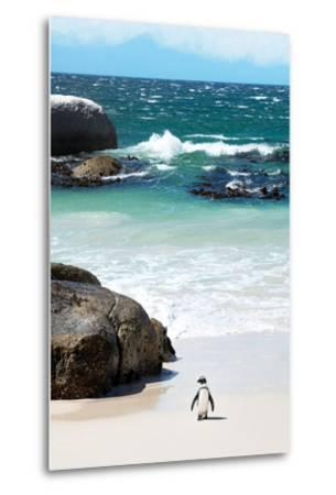 Awesome South Africa Collection - Penguin at Boulders Beach-Philippe Hugonnard-Metal Print