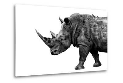 Safari Profile Collection - Rhino White Edition-Philippe Hugonnard-Metal Print