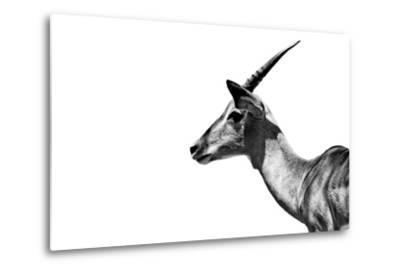 Safari Profile Collection - Antelope Impala White Edition-Philippe Hugonnard-Metal Print