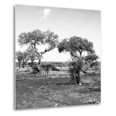 Awesome South Africa Collection Square - African Landscape with Acacia Trees B&W-Philippe Hugonnard-Metal Print