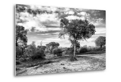 Awesome South Africa Collection B&W - African Landscape with Acacia Tree IX-Philippe Hugonnard-Metal Print