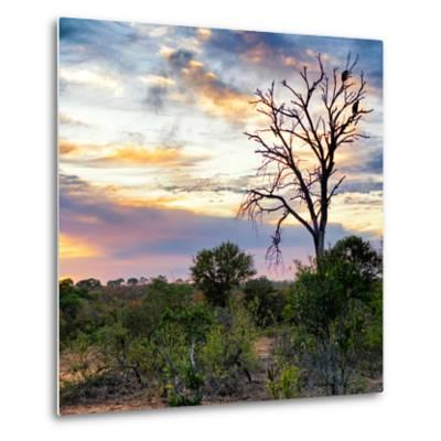 Awesome South Africa Collection Square - Sunrise in Savannah-Philippe Hugonnard-Metal Print