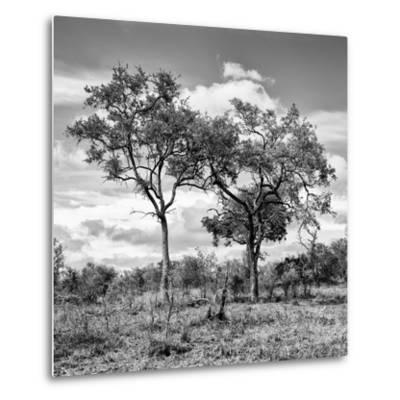 Awesome South Africa Collection Square - Savannah Trees II B&W-Philippe Hugonnard-Metal Print