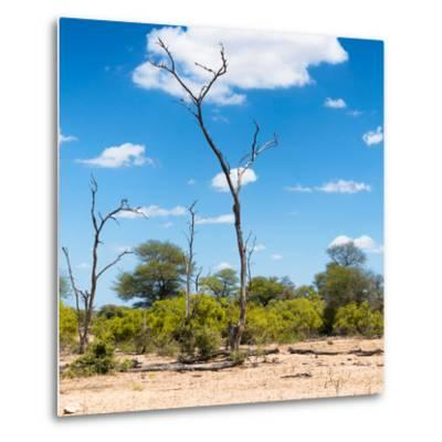 Awesome South Africa Collection Square - Savannah Landscape IV-Philippe Hugonnard-Metal Print